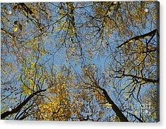 Acrylic Print featuring the photograph Glorious Tree Tops by Kennerth and Birgitta Kullman
