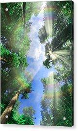 Glory Amongst Redwoods Acrylic Print