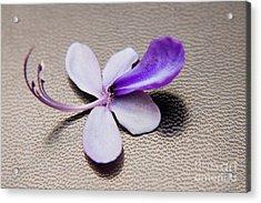 Glorybower Patio Tree Flower Acrylic Print by Julia Hiebaum