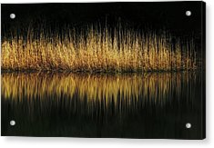 Glow And Reflections At Lakes Edge Acrylic Print by Gary Slawsky