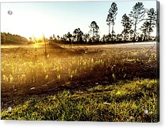 Acrylic Print featuring the photograph Glow by Eric Christopher Jackson