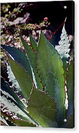 Acrylic Print featuring the photograph Glowing Agave by Phyllis Denton
