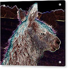 Glowing Alpaca Acrylic Print