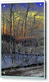 Glowing Aspens At Dusk Acrylic Print