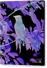 Acrylic Print featuring the photograph Glowing Cedar Waxwing by Smilin Eyes  Treasures