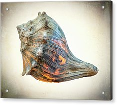 Acrylic Print featuring the photograph Glowing Conch Shell by Gary Slawsky