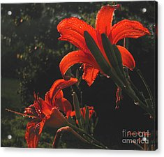 Acrylic Print featuring the photograph Glowing Day Lilies by Donna Brown