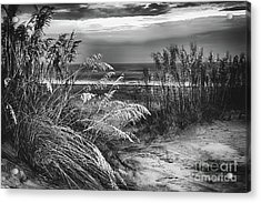 Acrylic Print featuring the photograph Glowing Dunes Before Sunrise On The Outer Banks Bw by Dan Carmichael