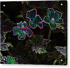 Glowing Flowers Acrylic Print by Scott Gould
