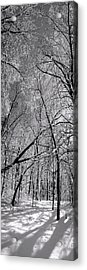 Glowing Forest, Knoch Knolls Park, Naperville Il Acrylic Print
