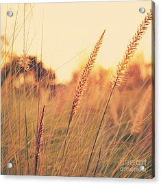 Glowing Fountain Grass - Hipster Photo Square Acrylic Print by Charmian Vistaunet