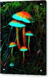 Glowing Mushrooms Acrylic Print