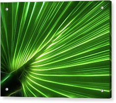 Glowing Palm Acrylic Print