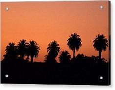 Glowing Palms Acrylic Print by Brad Scott