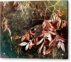 Glowing Sumac With Berries Acrylic Print by Bellesouth Studio