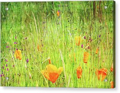 Glowing Summer Acrylic Print by Terrie Taylor