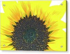 Glowing Sunflower Acrylic Print