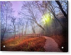 Acrylic Print featuring the photograph Glowing Through The Trees by Debra and Dave Vanderlaan
