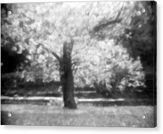 Glowing Tree Acrylic Print