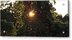 Acrylic Print featuring the photograph Glowing Tree by Michael Albright