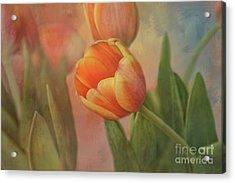 Glowing Tulip Acrylic Print by Joan Bertucci