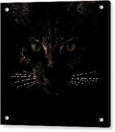 Glowing Whiskers Acrylic Print by Helga Novelli