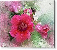 Gloxinia-4 Acrylic Print