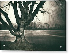 Gnarled Old Tree Acrylic Print