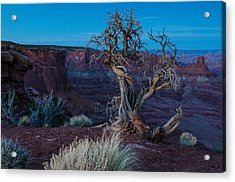 Gnarled Acrylic Print by Paul Noble