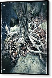Gnarled Rooted Beauty Acrylic Print