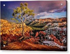Gnarled Tree At Bryce Canyon Acrylic Print