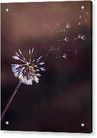 Acrylic Print featuring the photograph Go Forth Fall by Heather Applegate