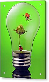 Go Green Acrylic Print by William Lee