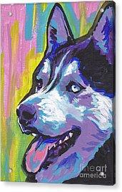 Go Husky Acrylic Print by Lea S