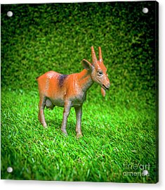 Goat Figurine Acrylic Print