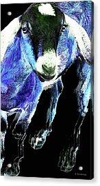 Goat Pop Art - Blue - Sharon Cummings Acrylic Print by Sharon Cummings
