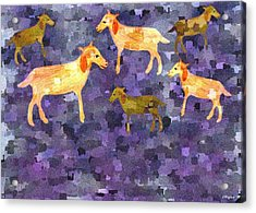 Goats In The Field Acrylic Print by Sher Magins