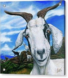 Goats Of St. Martin Acrylic Print