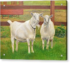 Goats On The Farm Acrylic Print by Phyllis Tarlow