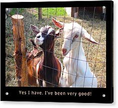 Acrylic Print featuring the photograph Goats Poster by Felipe Adan Lerma