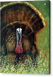 Gobbler In The Grass Acrylic Print