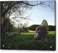 Gobbler's Morning Dance Acrylic Print