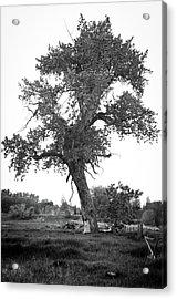 Goddess Tree 2 Acrylic Print by Matthew Angelo