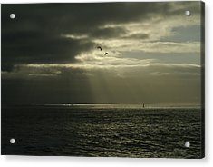 God's Gulls Acrylic Print by Michael Courtney