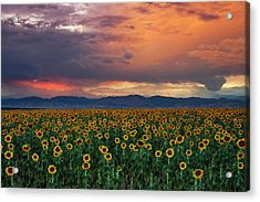 Acrylic Print featuring the photograph God's Sunflower Sky by John De Bord
