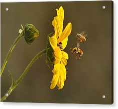 Acrylic Print featuring the photograph God's Work by Al Swasey