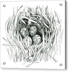 Godwit Nest Acrylic Print
