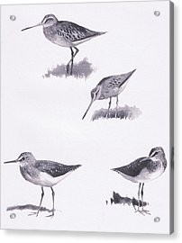 Godwits And Green Sandpipers Acrylic Print