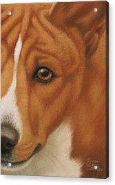 Goggie Basenji Acrylic Print by Karen Coombes