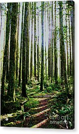 Going Green Acrylic Print by Dean Edwards
